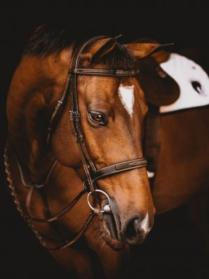 Hunter Bridle with Fancy Stitching