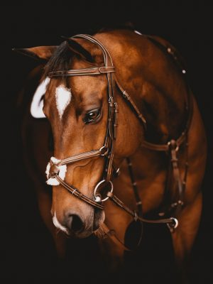Anatomic Figure 8 Noseband Bridle