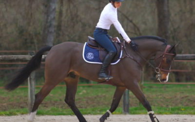 What's a good jumping saddle?