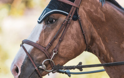 Discover Our Range of Horse Accessories!